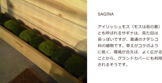 SAGINA003